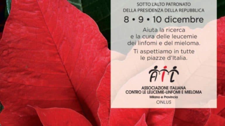 Stella Di Natale Piazze Italiane.Dove Trovare Le Stelle Di Natale Dell Ail Nel Varesotto
